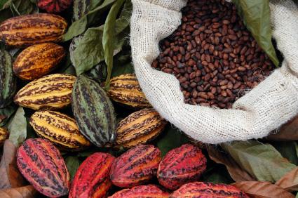 kakao cekirdekleri