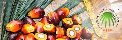 surdurulabilir palmiye hurma yagi