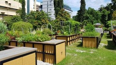 hobi bahçesi 2